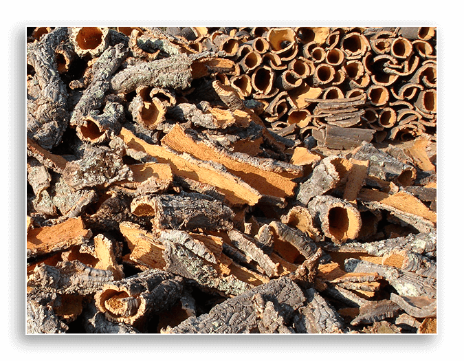 Image of bark from a cork oak tree.