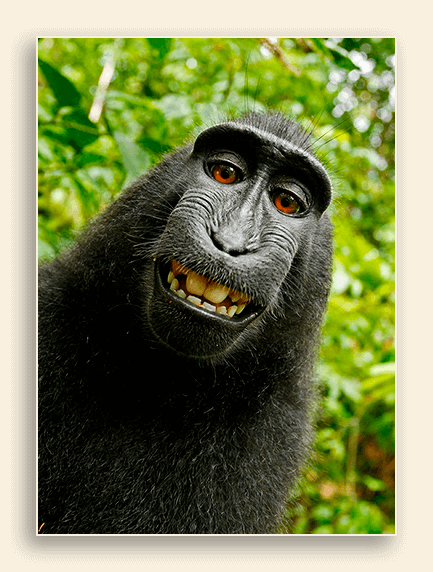 Image of smiling monkey.