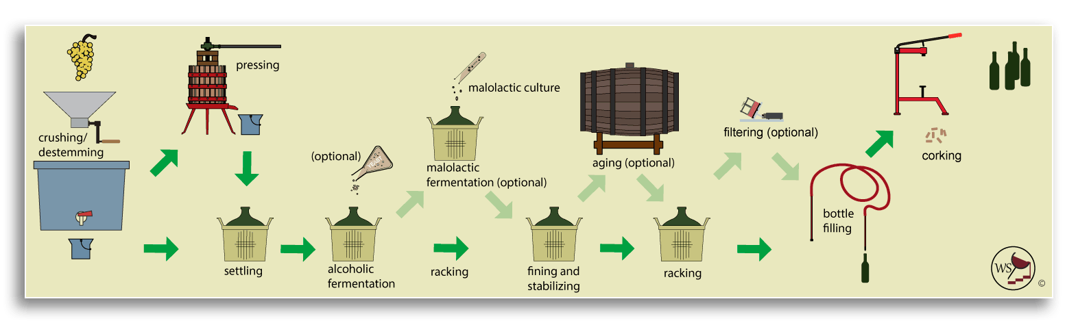 Infographic workflow showing how to make wine from fresh white grapes