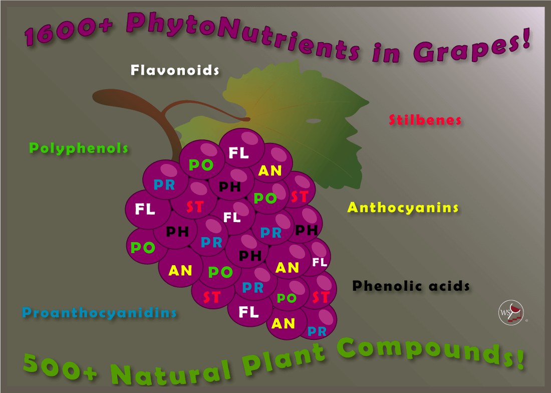 Infographic explaining about phytonutrients in red wine and grapes.