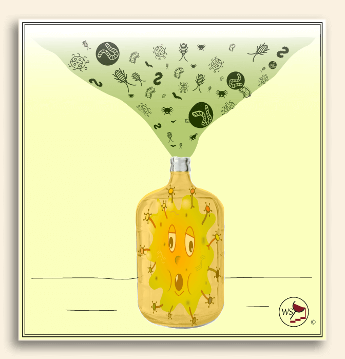 Infographic showing a carboy with ruined white wine in it