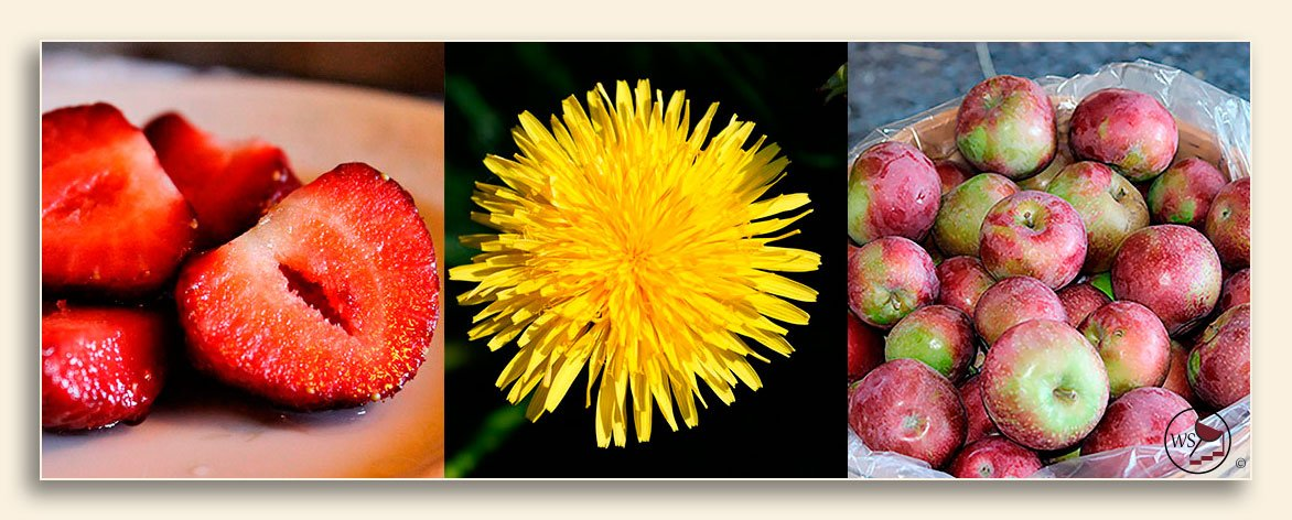 Image of strawberries, dandelion, and apples that you can make country wine from