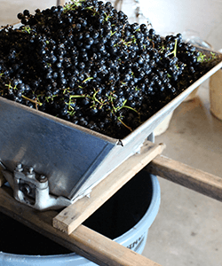 Image of fresh wine grapes in a crusher.