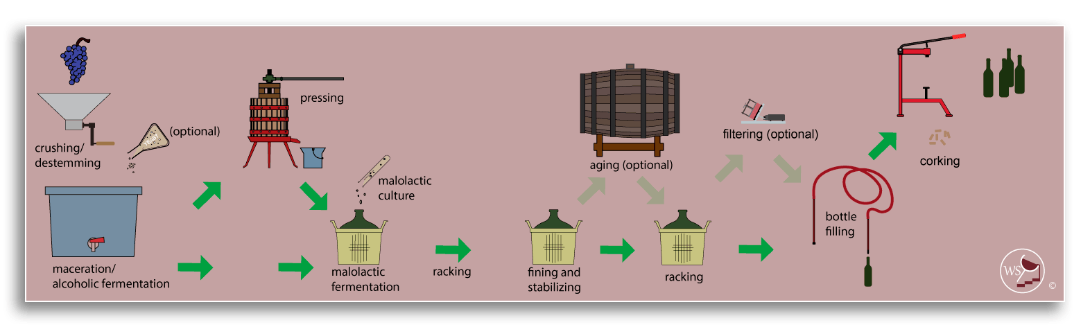 Infographic showing workflow for making wine from fresh red grapes