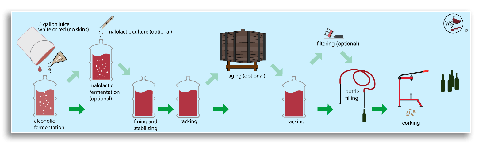 Infographic showing winemaking workflow from grape juice